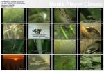 Co w stawie piszczy / Fascinating Cosmos Under a Lotus Pond (2000) TVRip.XviD / PLSUB