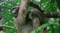 BBC: �ycie ssak�w / Life of mammals (2008)  PL.DVDRip.XviD.AC3-PNG Lektor PL +rmvb