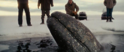 Na ratunek wielorybom / Big Miracle (2012)  PL.480p.BRRip.AC3.XviD-SAVED  Lektor PL  +rmvb