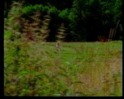 http://thumbnails63.imagebam.com/19609/498288196087899.jpg